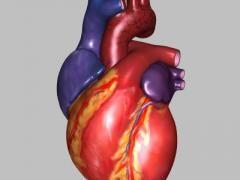 Невроз серця
